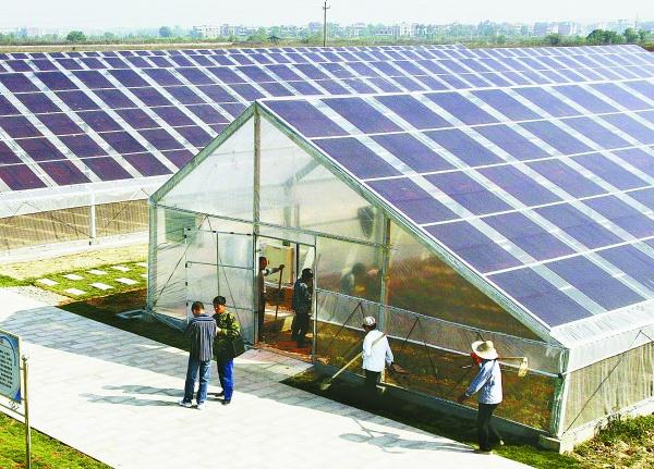 Solarstrom Vom Gewachshaus